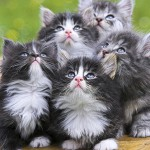 Cute little kittens
